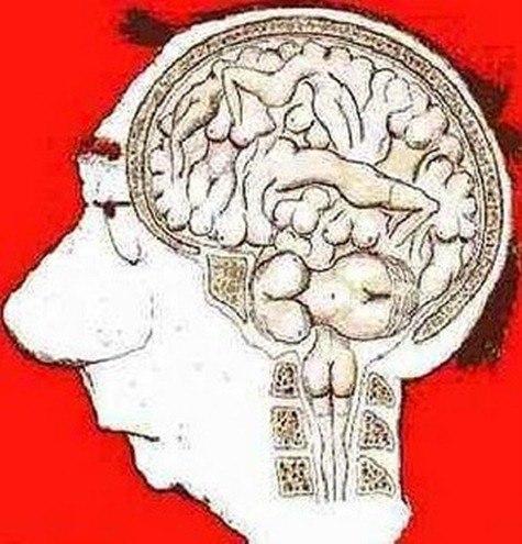 Cerebro_masculino1
