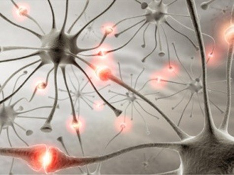 cerebro neuronas