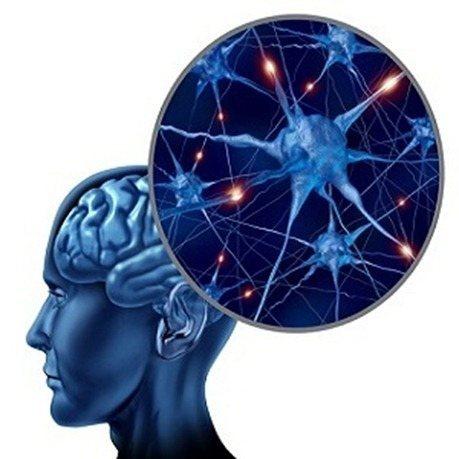 redes cerebrales
