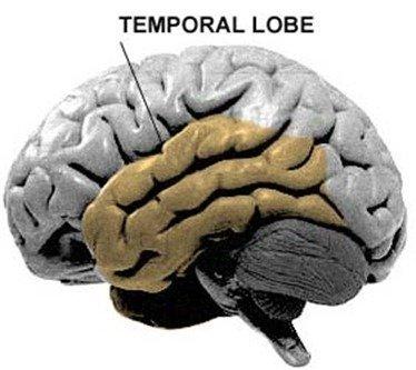 La agresión | componentes biológicos y psicológicos
