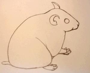 test-animal-hamster
