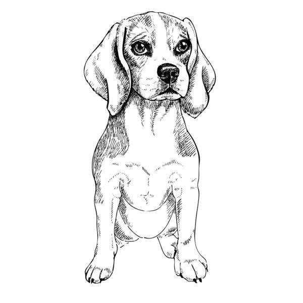 Test animal perro