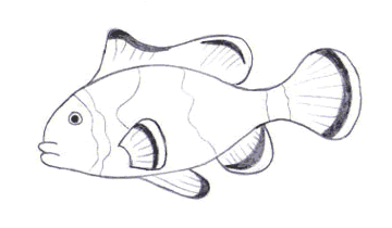 test-animal-pez