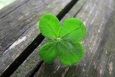 4-leaf-clover-optimized