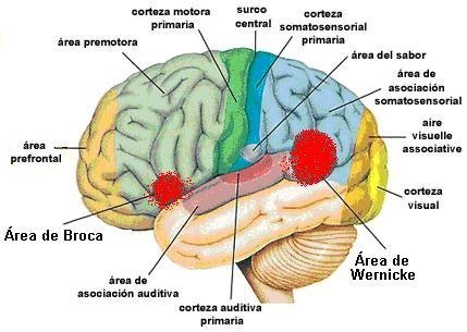 Hemisferio-izquierdo-779495