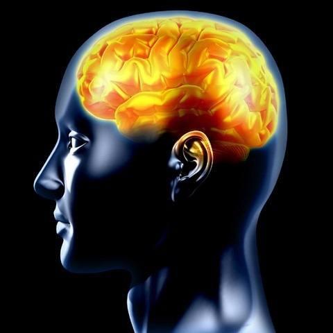 cerebro-curiosidades.jpg