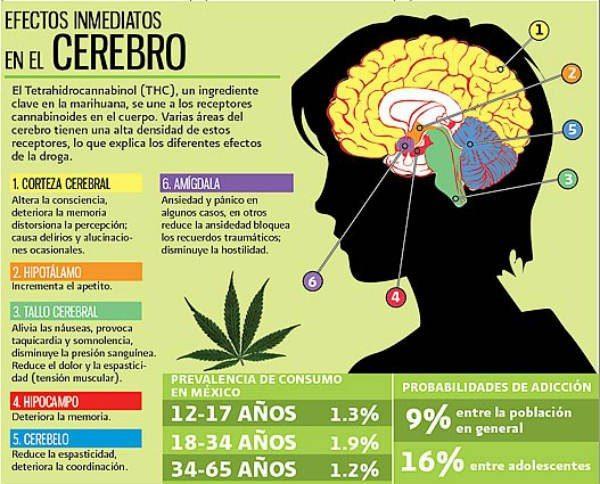 efectos-de-la-mariguana-en-el-cerebro