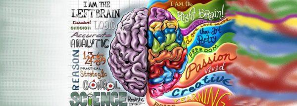 hemisferios-cerebrales