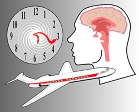 ¿Relojes biológicos o Ritmos circadianos?