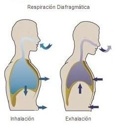Al niño la eflorescencia la temperatura el dolor en la espalda