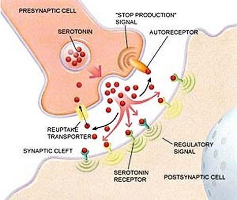 La serotonina en la depresion