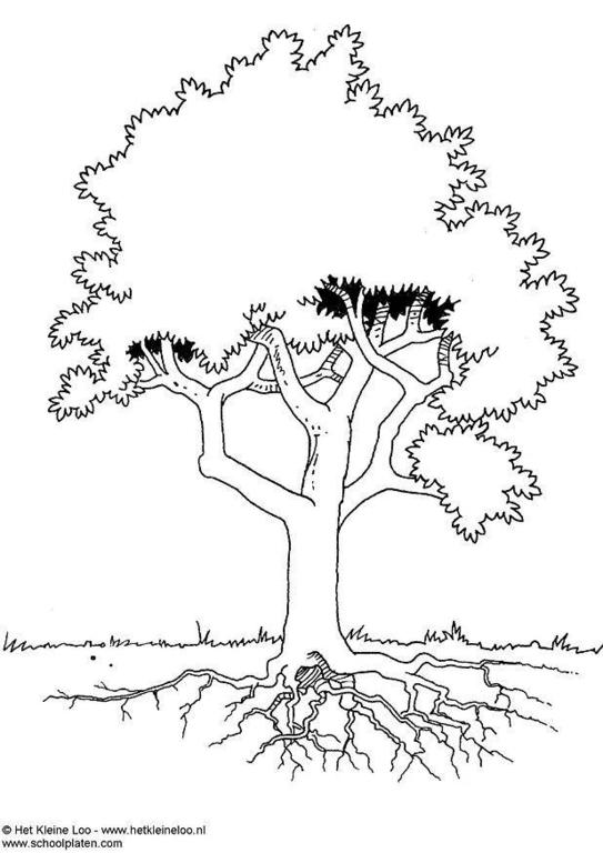 test del arbol interpretacion pdf